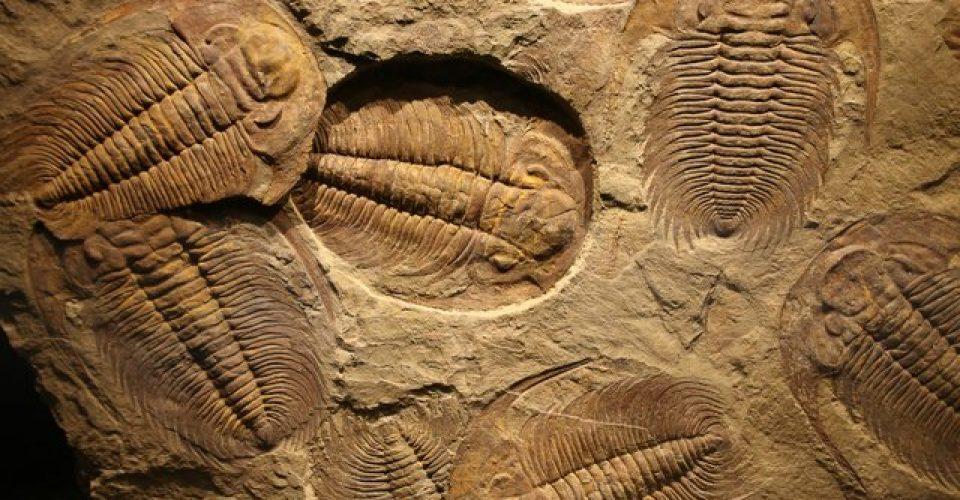 اهمیت فسیلها در مسائل اقتصادی، علمی و گردشگری قابل مشاهده است